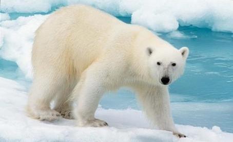 Графическое изображение медведя